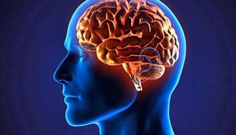 """Núcleo """"novo"""" no cérebro pode fazer dos humanos únicos"""